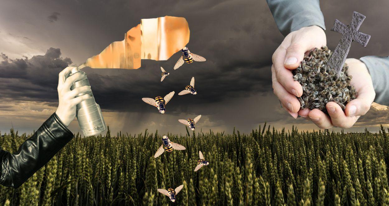 Afbeelding van De biodiversiteit op aarde staat onder druk