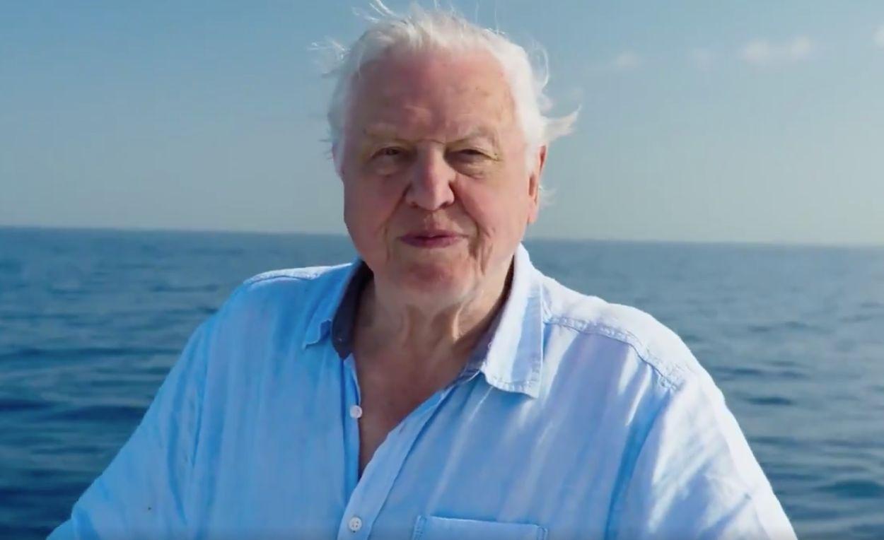 Afbeelding van Haal diep adem en duik mee met Sir David Attenborough